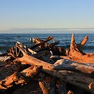 Lake Superior Driftwood  by Megan Noble