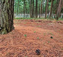 Pine Forest Floor by Rob  Southey