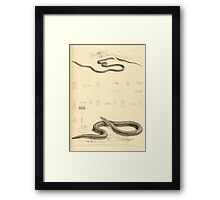 The Reptiles of British India by Albert C L G Gunther 1864 0515 Snakes Framed Print