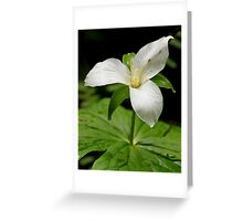 Traversing a Soft White Face Greeting Card
