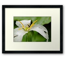 The Floral Trap Framed Print