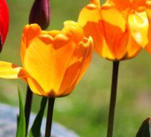 Tulips in the Light Sticker