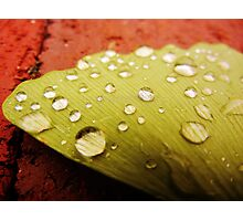 Droplets Photographic Print
