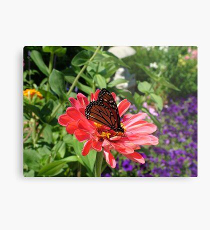 Conneticut Yankee Butterfly Metal Print