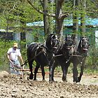 Putting a Hand to the Plow (And a Few Horses) by clizzio