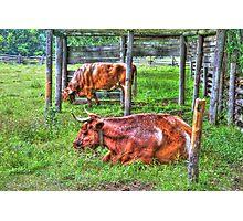 Pasture Scene Photographic Print