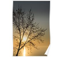 A Filigree of Branches Framing the Sunrise Poster