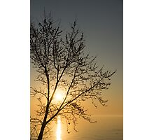 A Filigree of Branches Framing the Sunrise Photographic Print