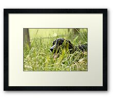 Toddy in the grass  Framed Print