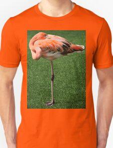 Lesser Flamingo T-Shirt Unisex T-Shirt