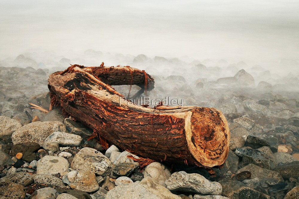 Driftwood by PaulBradley
