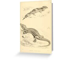 The Reptiles of British India by Albert C L G Gunther 1864 0501 Gecko Stentor, Eublepharis Hardwickii Greeting Card
