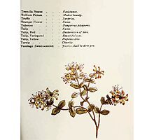 Language of Flowers Kate Greenaway 1884 0045 Descriptions of Specific Flower Significations Photographic Print