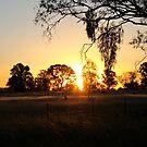Mistletoe Sunset by Natalie Ord