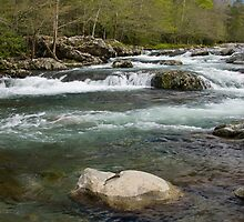 Middle Prong Little Pigeon River by Gary L   Suddath