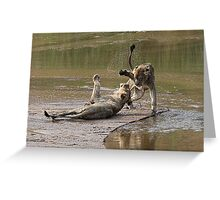 Young Lions Playing In Water Greeting Card