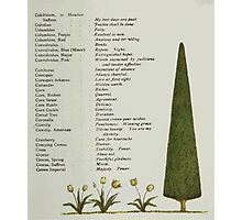 Language of Flowers Kate Greenaway 1884 0017 Descriptions of Specific Flower Significations Photographic Print