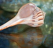 Sanibel Island Lightning Whelk by Bonnie T.  Barry