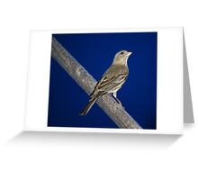 Momma Bird Greeting Card