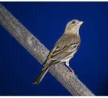 Momma Bird Photographic Print