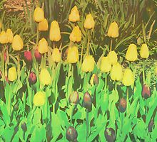 Card: Tulips by amak
