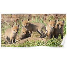 5 of 9 Red Fox Kits Poster