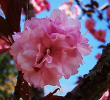 Kwanzaa Cherry Blossoms by Poete100