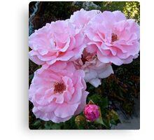 Pink Tea Roses, floral art, wall decor Canvas Print