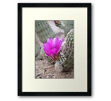 Magenta Cactus Bloom Framed Print