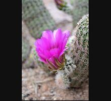 Magenta Cactus Bloom Unisex T-Shirt