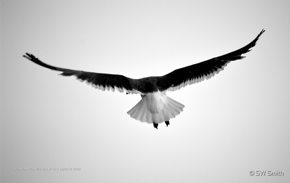 Seagull | Center Moriches, New York  by © Sophie W. Smith