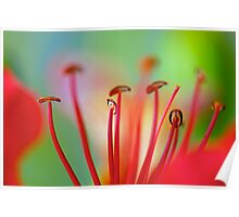 Red Stamens Poster