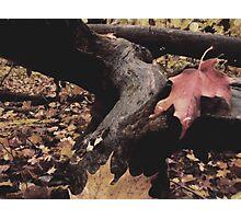 Signs of Snuggle Season  Photographic Print