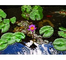 Tranquility - Lotus Flower Koi Pond by Sharon Cummings Photographic Print