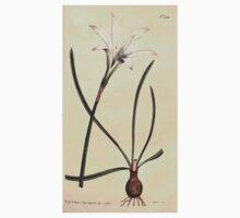 The Botanical magazine, or, Flower garden displayed by William Curtis V7 V8 1794 0047 Amaryllis Atamasco, Atamasco Lilly Baby Tee