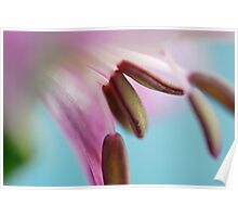 Pastel Stamens Poster