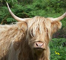 Bad Hair Day by Tracey Ross