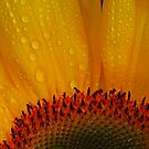 Sunshine and Rain by Barbara  Brown