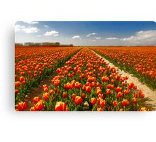 A few more tulips...... Canvas Print