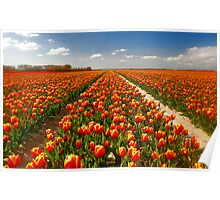 A few more tulips...... Poster