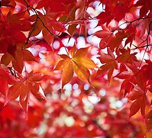 Japanese Maple by Areej Obeid