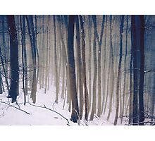 Whispers of the Forest - Forest Trees with Snow Photographic Print