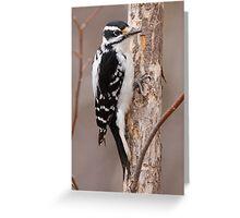 Downey Woodpecker (female) Greeting Card