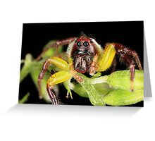 Green Jumping Spider - Male Greeting Card