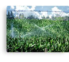 Green, Corn Fed Country, Caldwell, Idaho Canvas Print