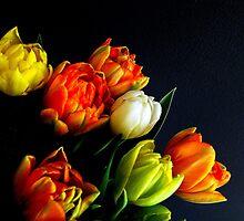 Tulips II by Ritva Ikonen