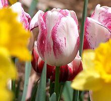 Springtime by Lolabud