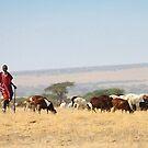 Maasai (or Masai) Herder with Cattle, Tanzania  by Carole-Anne