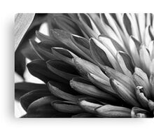 Abstract Petals (Mum) - B&W      ^ Canvas Print