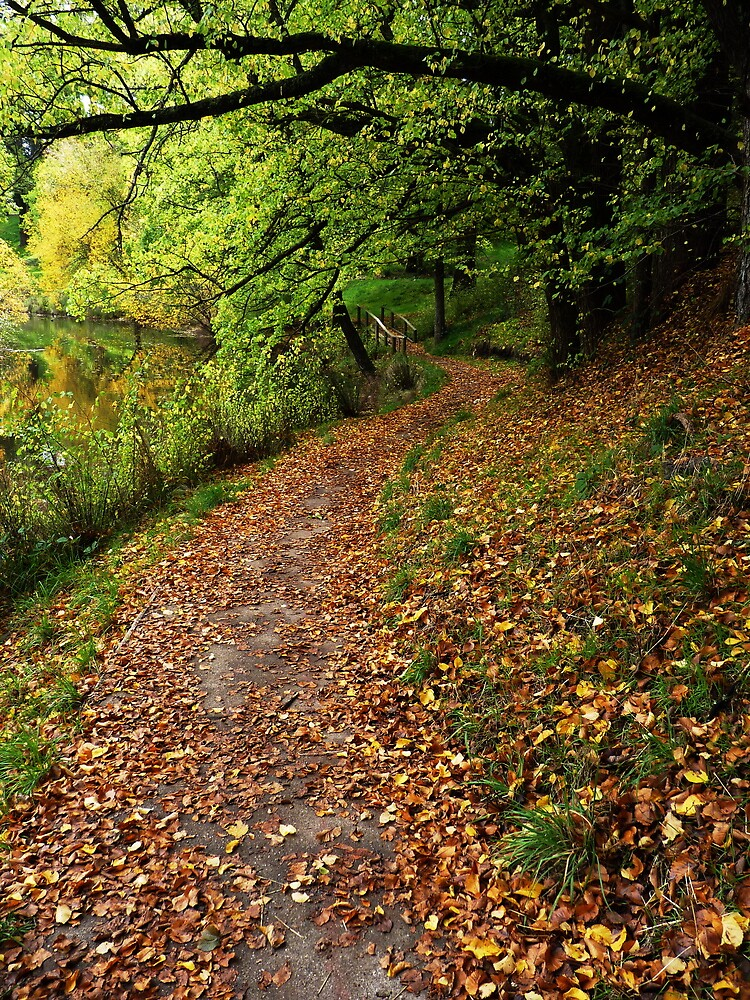 Leafy Stroll by Meg Hart